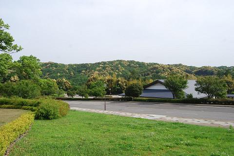 ツブラジイの山