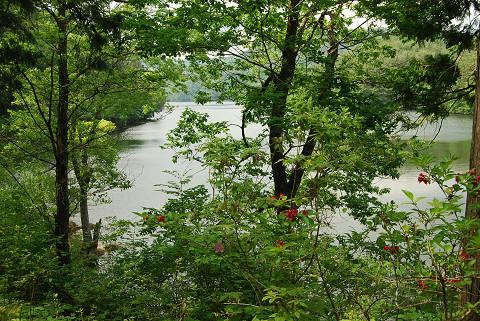 三河湖とヤブウツギ