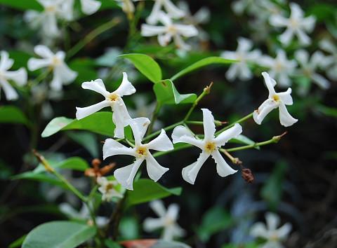 白い花?2