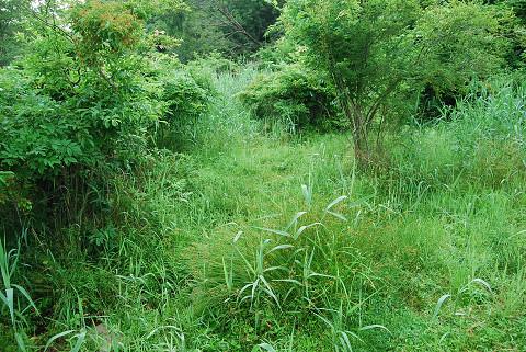 草ぼうぼうの湿地1