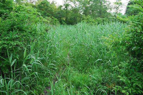 草ぼうぼうの湿地2