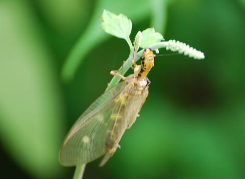 なんという昆虫?