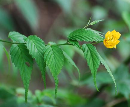 何この黄色の花1