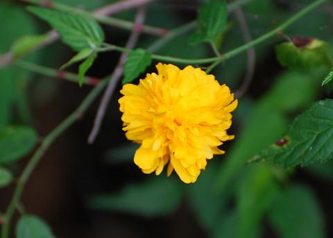何この黄色の花2
