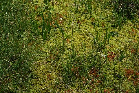 湿原のミズゴケなど