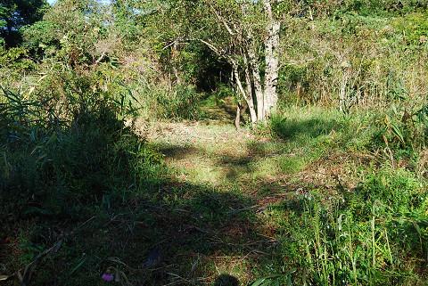 湿地の草刈り1