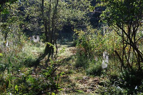 湿地の草刈り2