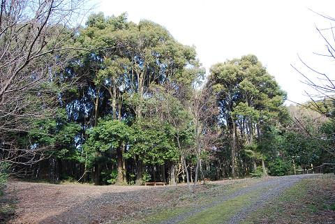 ツブラジイの森が