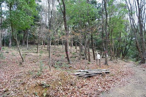伐採で疎林が