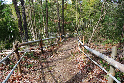 竹の小道が