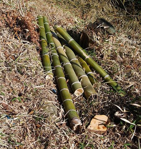 切られた竹