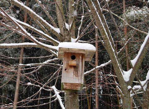 寒そうな巣箱