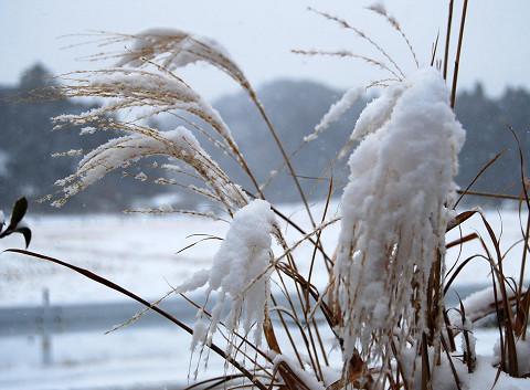 雪とススキ
