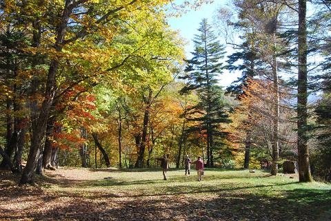 秋の雑木林1