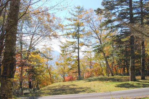 秋の雑木林2