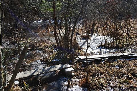 凍りついた湿地1