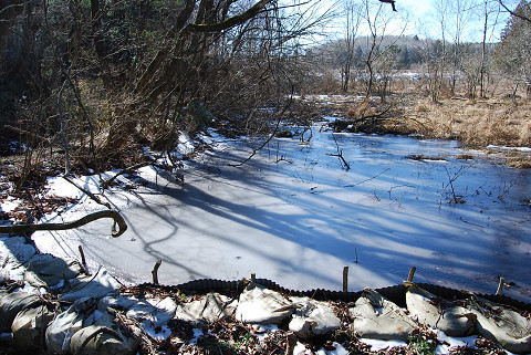 凍りついた湿地2
