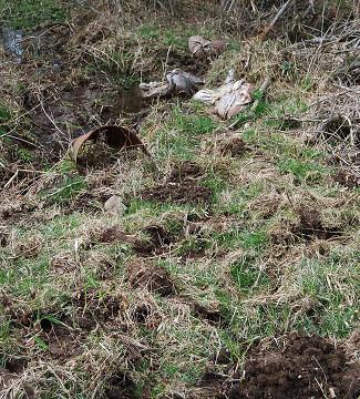 掘られた草道