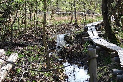 湿地の木道