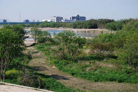 矢作川河畔林