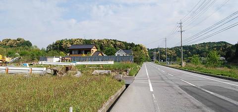 ツブラジイの山2