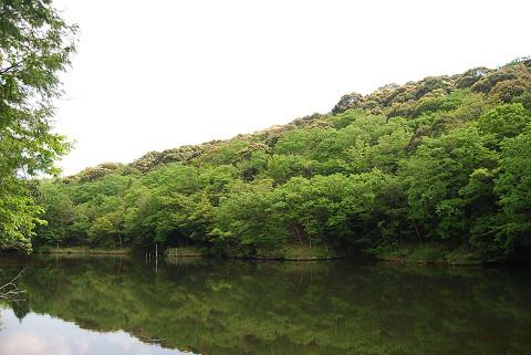 ツブラジイの山5
