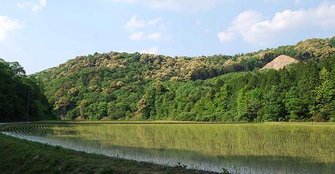 ツブラジイの山3
