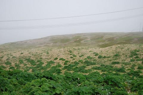 広がる草原
