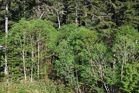 周辺の森2
