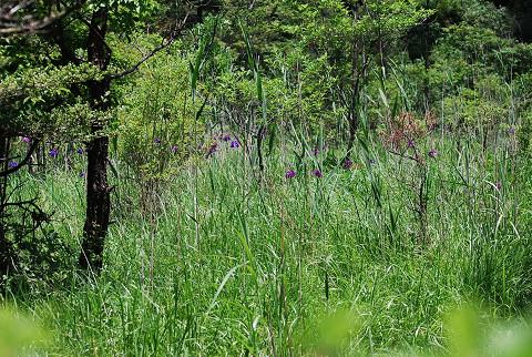 がんばり山湿原1