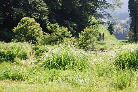 城山公園湿地