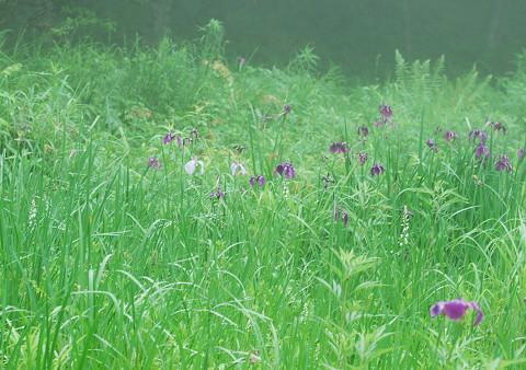 湿地の花園