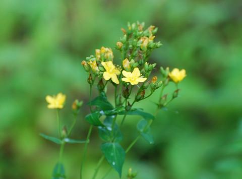 ?黄色い花