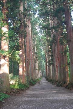 奥の院への杉並木