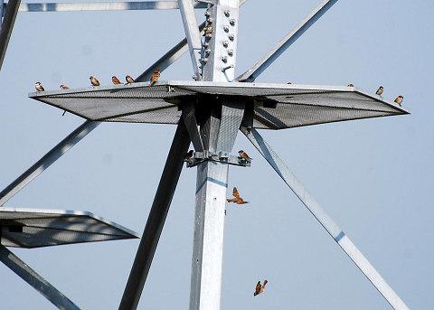 鉄塔に雀の群れ