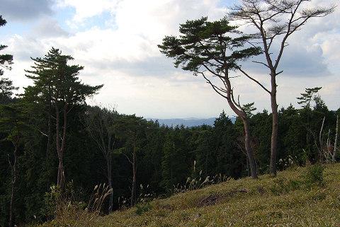 観測塔からの景色