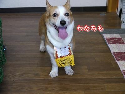 土佐犬 (14)