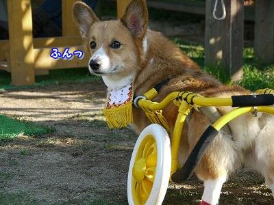 土佐犬 (13)