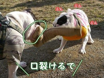 ぶんぶん (5)