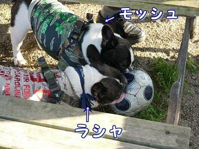 サッカーボール (1)