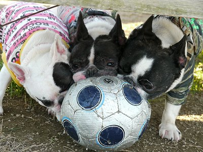 サッカーボール (8)