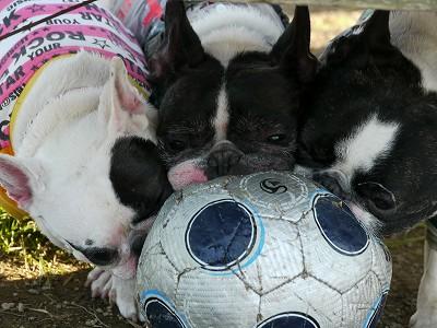 サッカーボール (7)