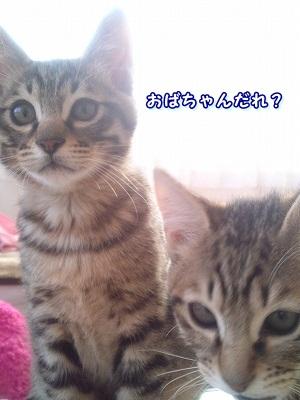実家2 (2)