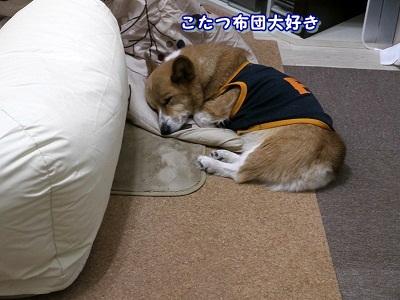 好き (1)