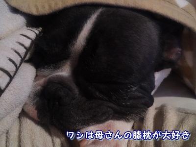 好き (4)