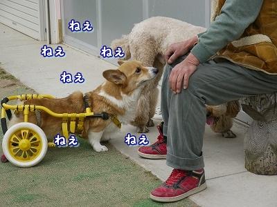 三角関係 (6)