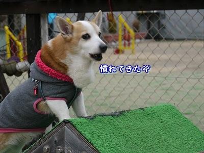 怖くない (3)