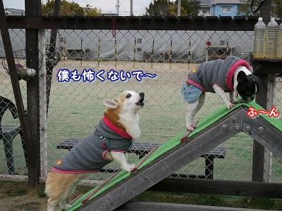 怖くない (10)