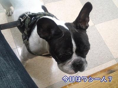 外耳炎 (3)
