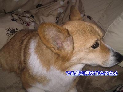 コタツ (3)